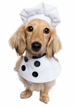Chef Pet Costume Update