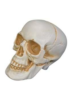 7 Realistic Talking Skull