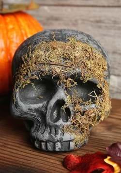 Moss Covered Skull-2