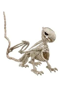 "5.5"" Griffin Skeleton"
