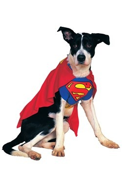 Superman Dog Costume Update 1